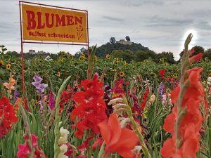 Blumen selber pflücken Gudensberg